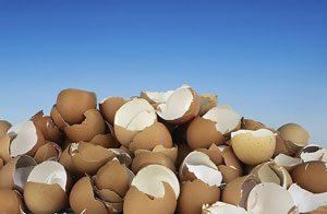 eggshellssm